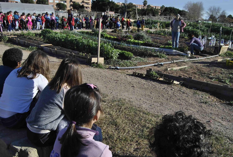 Els productes cultivats als Horts Urbans d'Alaquàs arriben al Banc d'aliments